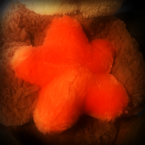 Plush starfish on the belly of a plush otter.
