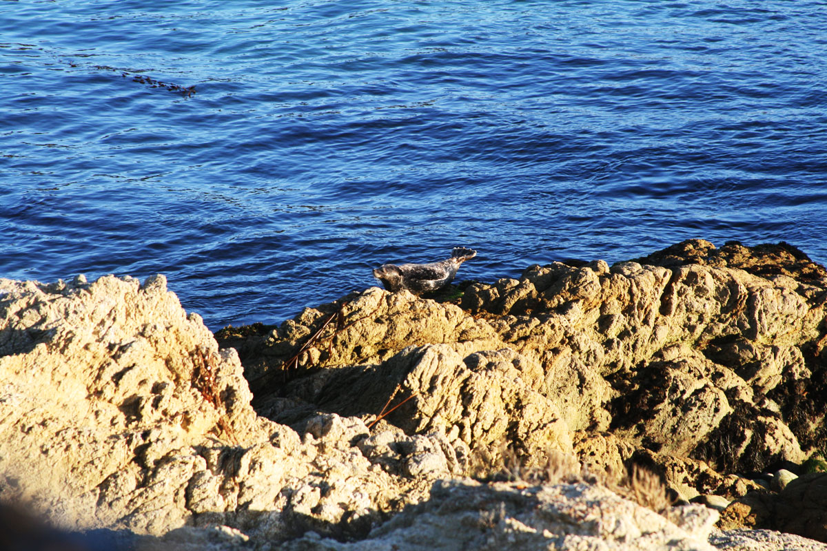 A harbor seal sunning itself on a rock looks like it was posing for our photos.