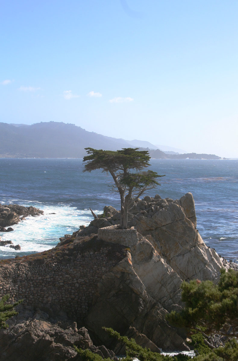 The Lone Cypress is picturesque, but has a good deal of human help.
